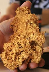 gold nugget 22 ounces