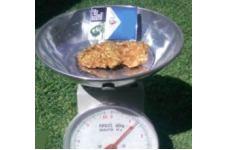 Gold Nugget 36 ounces - Click